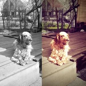 Colorized photo of our Grandpa's dog, Rusty, circa 1940s.